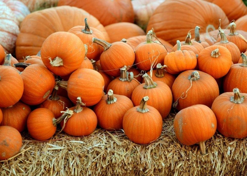 Nutrition guru and the chef pumpkin
